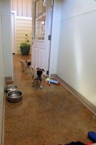 Clarksville Kennels | Eastview Veterinary Clinic